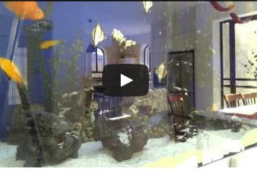 סיפורי דגים – איך לקפוץ למים ולהצליח בכל נושא חדש